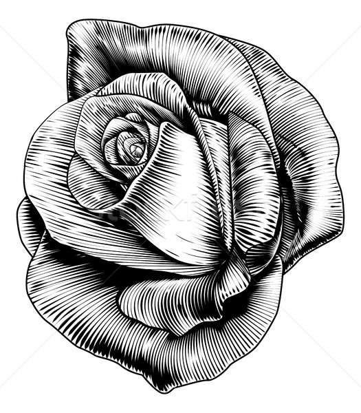 Rose Flower in Engraved Etching Woodcut Style Stock photo © Krisdog