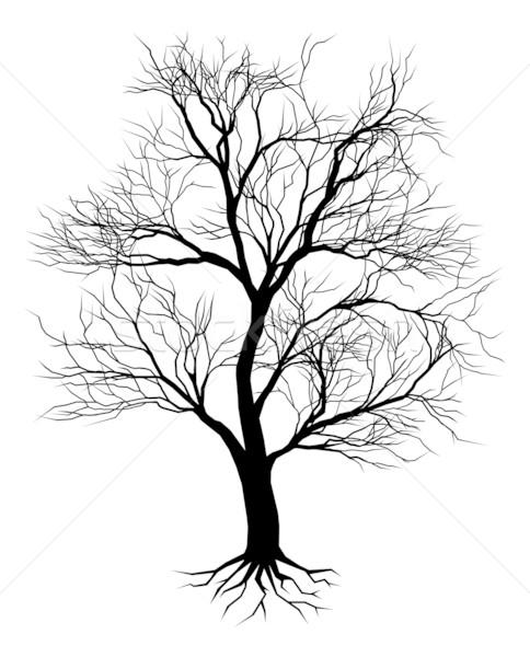 Hand drawn old tree silhouette Stock photo © Krisdog