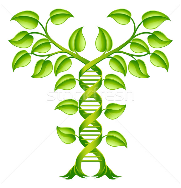 DNA Plant Double Helix Concept Stock photo © Krisdog