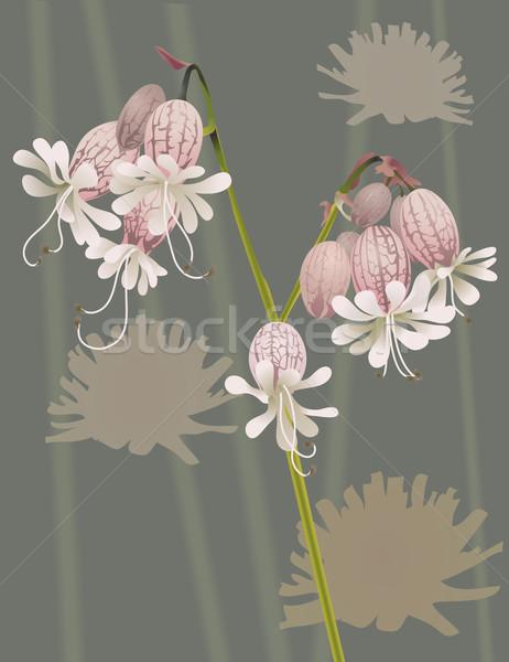 Gyönyörű vadvirág illusztráció virág nyár hát Stock fotó © Krisdog