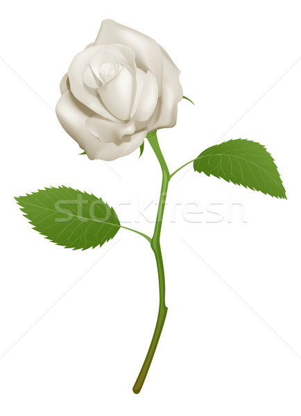 Illustration of a beautiful white rose Stock photo © Krisdog