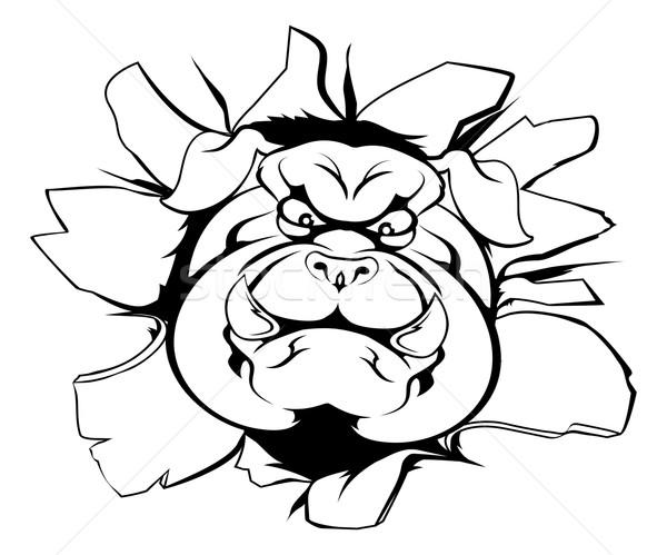 бульдог талисман прорыв характер спортивных лице Сток-фото © Krisdog