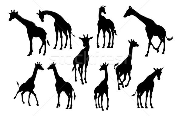 Giraffe Animal Silhouettes Stock photo © Krisdog