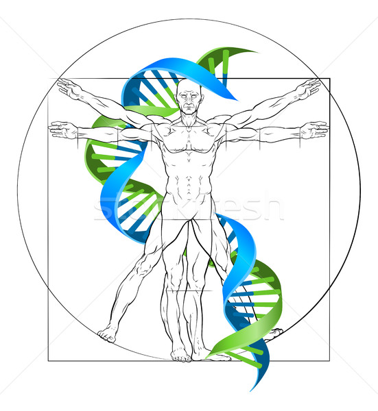 Vitruvian Man DNA Stock photo © Krisdog