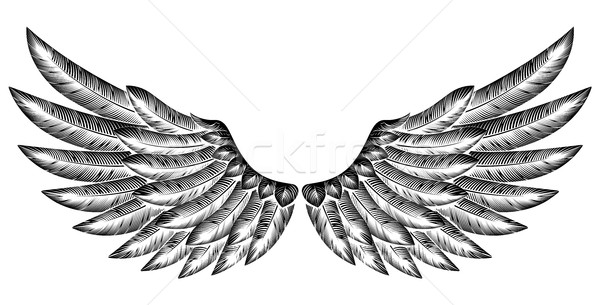 Pair of Bird Wings Stock photo © Krisdog