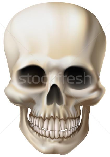 Illustration of a human skull Stock photo © Krisdog