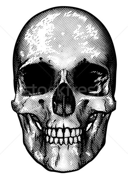 Skull Retro Style Drawing Stock photo © Krisdog
