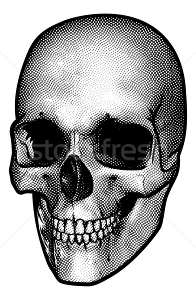 Stock photo: Skull Vintage Style Drawing