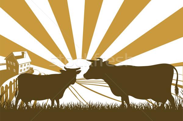 Sunrise Cow Farm Landscape Stock photo © Krisdog