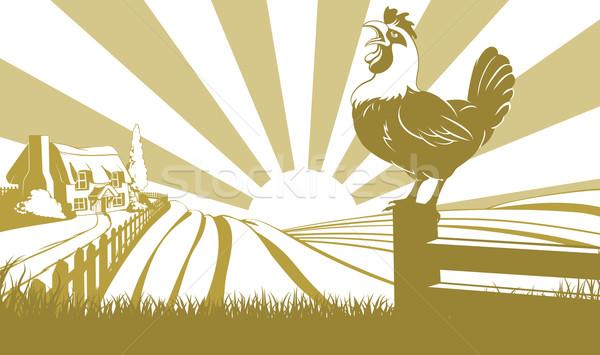 Rooster farm field concept Stock photo © Krisdog