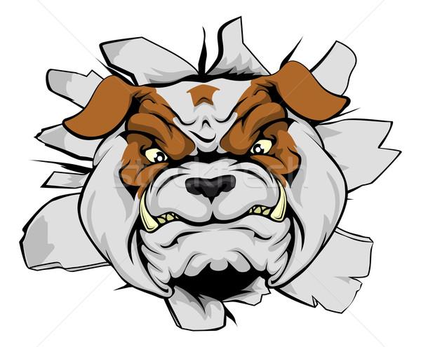 Bulldog głowie ściany maskotka przełom byka Zdjęcia stock © Krisdog