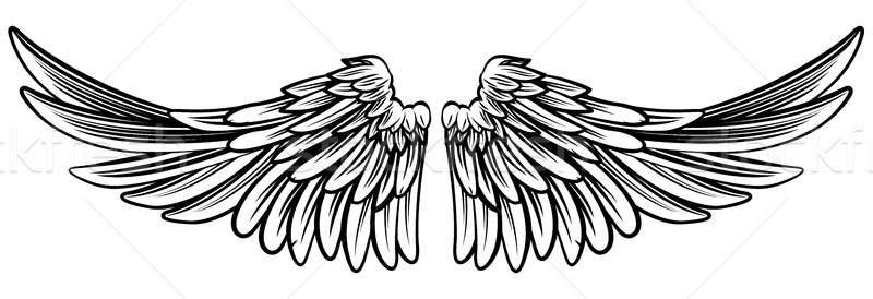 Spread Pair of Angel or Eagle Wings  Stock photo © Krisdog