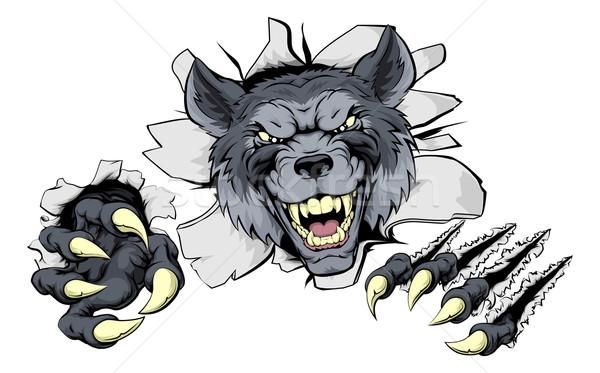 Wolf claws break out Stock photo © Krisdog