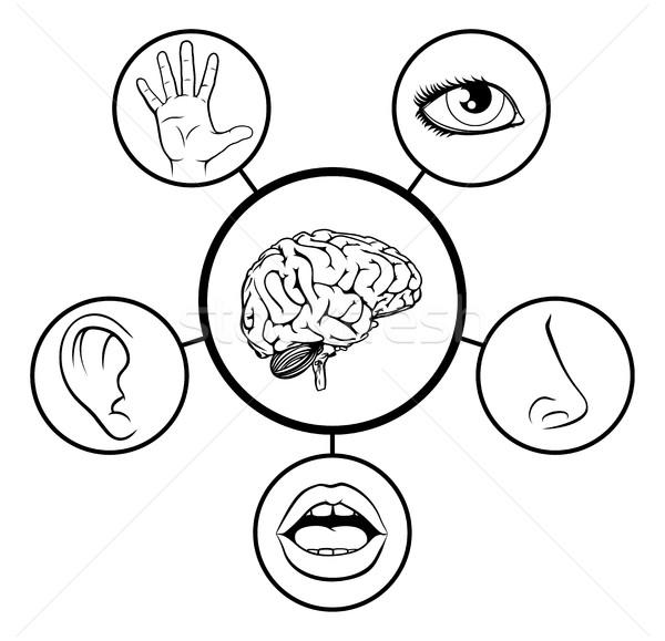 Cérebro cinco ciência educação ilustração ícones Foto stock © Krisdog