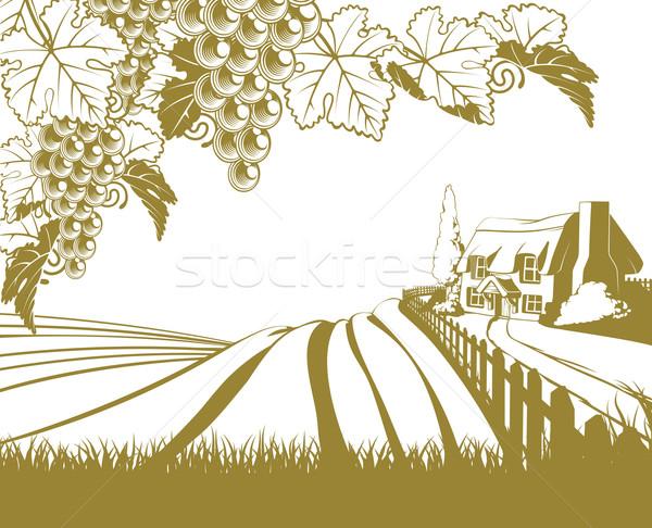 Vineyard rolling hills scene Stock photo © Krisdog