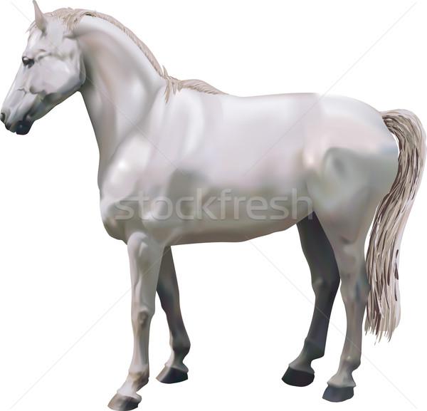 Lovak illusztráció ló terv szépség verseny Stock fotó © Krisdog