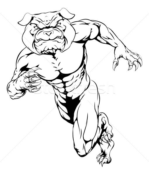 Running tough bulldog Stock photo © Krisdog