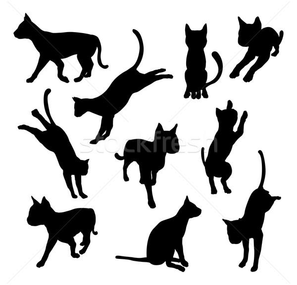 Pet cat silhouettes Stock photo © Krisdog