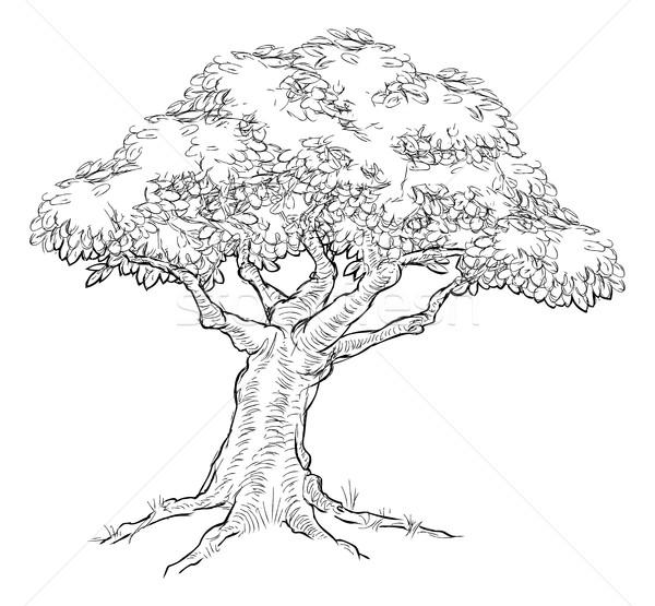 商业照片: 素描 · 风格 ·树· 橡树 · 手工绘制 · 复古