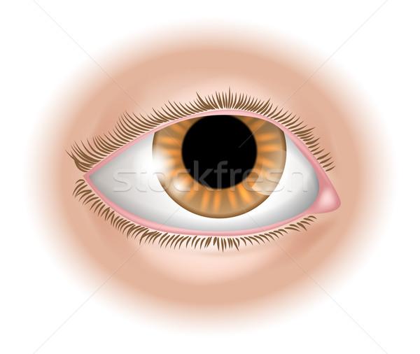 Eye body part illustration Stock photo © Krisdog
