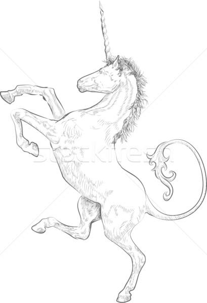 unicorn Stock photo © Krisdog