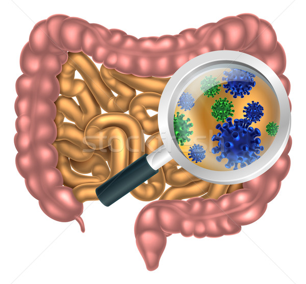 Stock photo: Magnifying Glass Gut Flora