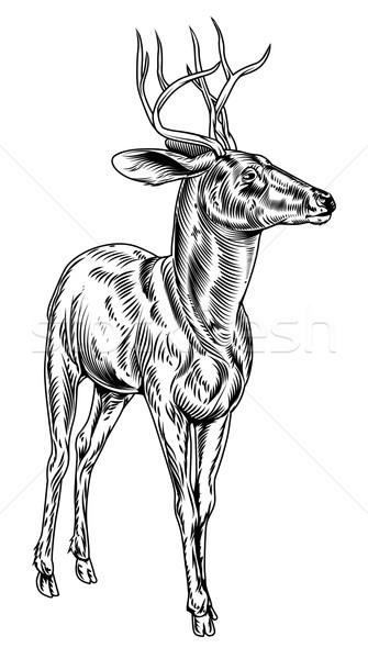 Vintage style woodcut stag deer Stock photo © Krisdog