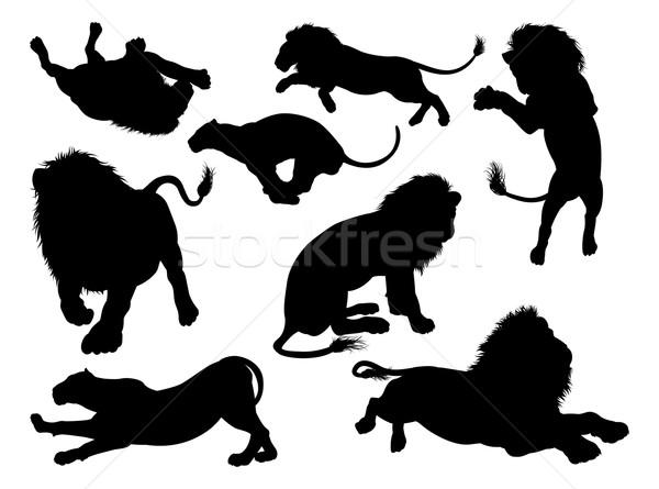 Silhouette Lions Stock photo © Krisdog