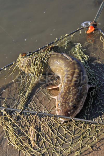 Eau douce poissons pêche sable rivière net Photo stock © krugloff