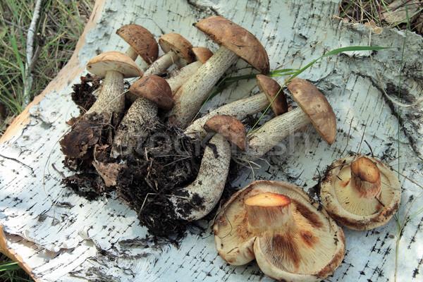 Mushrooms  Stock photo © krugloff