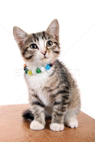 Piccolo pet felice gattino luminoso perline Foto d'archivio © krugloff