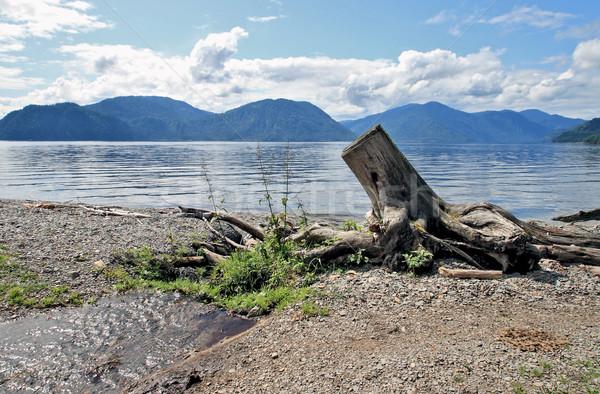 Arbre pittoresque emplacement lac eau nature Photo stock © krugloff