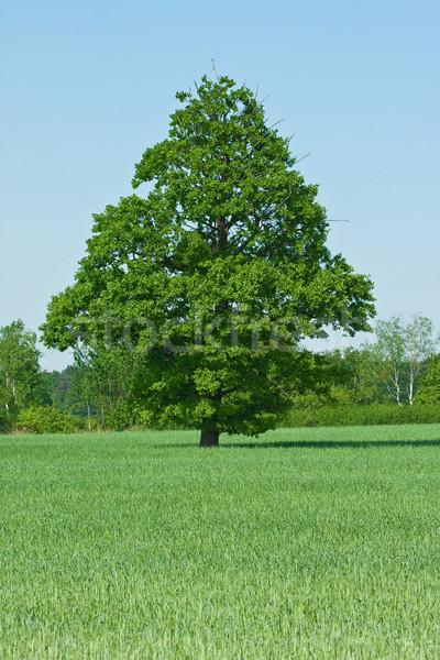 Mulino a vento farm primo piano cielo blu albero primavera Foto d'archivio © kubais