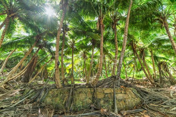 Palmeiras praia entrada árvore floresta folha Foto stock © kubais