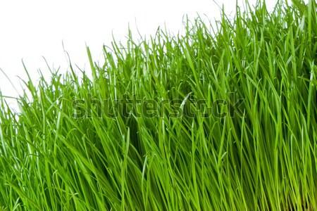 Groen gras voorjaar gras geïsoleerd witte Pasen Stockfoto © kubais