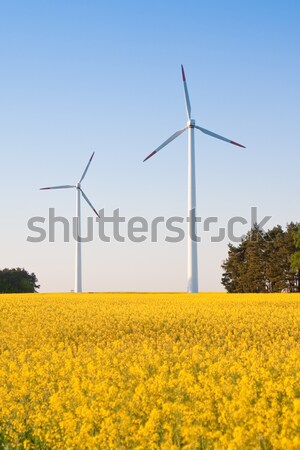 windmill  farm in the rape field Stock photo © kubais