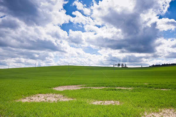 Zielone dziedzinie wiosną trawy drogowego charakter Zdjęcia stock © kubais