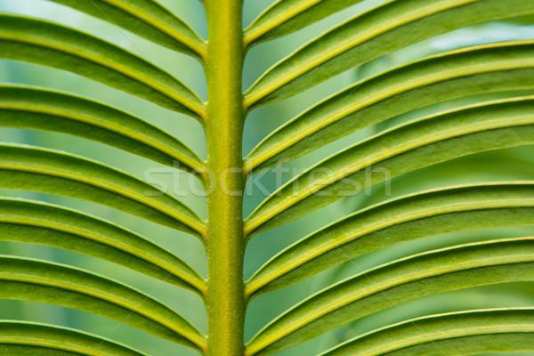 Eğreltiotu yaprak doğa renk büyüme Stok fotoğraf © kubais