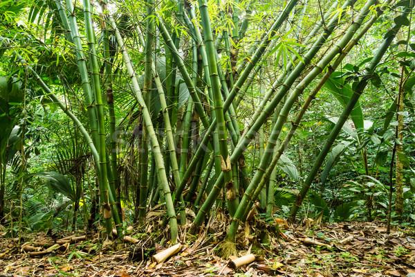 Selva tropical isla Seychelles forestales paisaje hoja Foto stock © kubais
