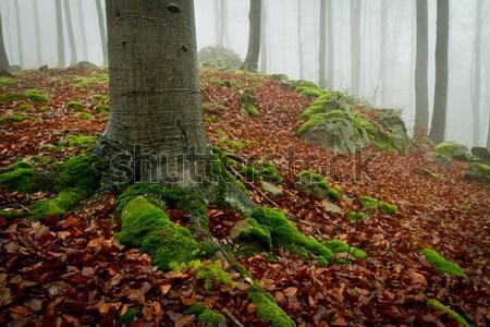 Misty foresta all'alba autunno natura alberi Foto d'archivio © kubais