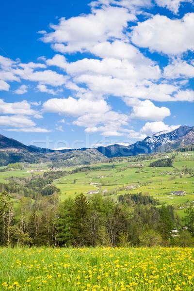 Alpine manzara bahar gökyüzü çim orman Stok fotoğraf © kubais