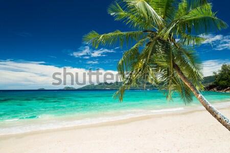 tropical beach with palm Stock photo © kubais