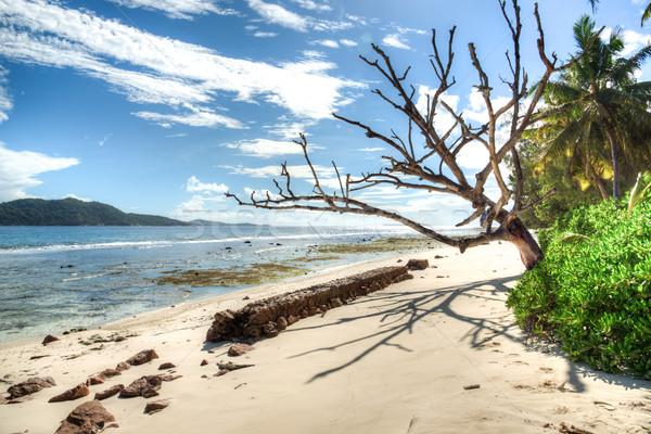 beach on Seychelles Stock photo © kubais