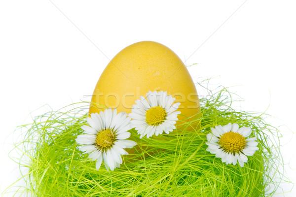Ovo de páscoa ninho pintado primavera feliz verde Foto stock © kubais