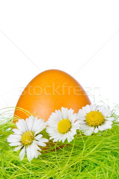 Easter egg gniazdo malowany wiosną szczęśliwy pomarańczowy Zdjęcia stock © kubais