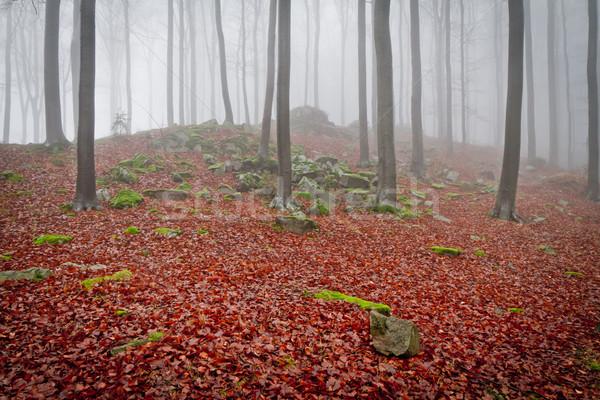 Foto d'archivio: Misty · foresta · all'alba · autunno · natura · alberi