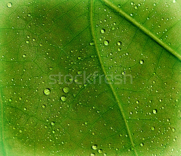Yaprak su doku doğa arka plan Stok fotoğraf © kuligssen