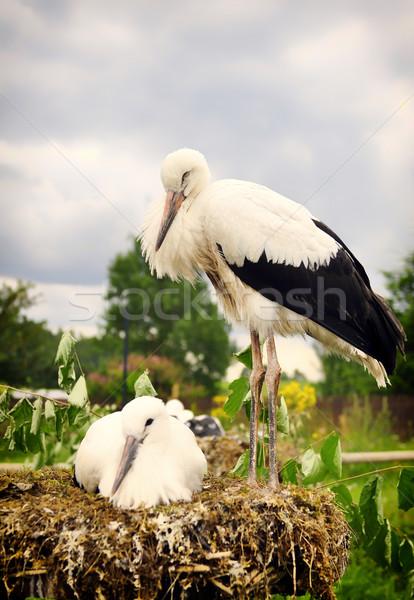 Genç bahar doğa anne siyah beyaz Stok fotoğraf © kuligssen