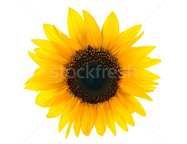 sun floweron white Stock photo © kuligssen