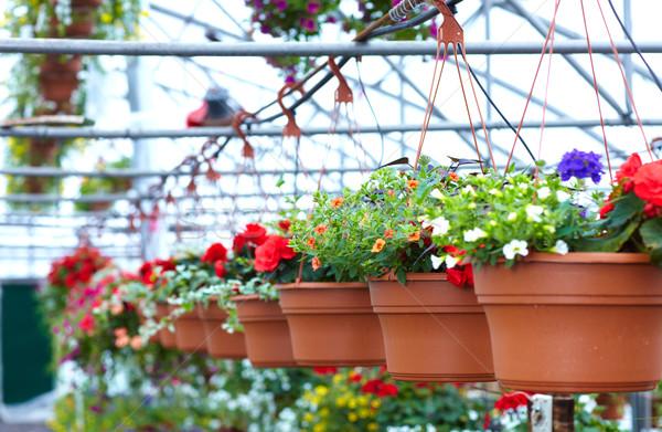 Gyönyörű virágok virágüzlet kertészkedés tavasz munka Stock fotó © Kurhan